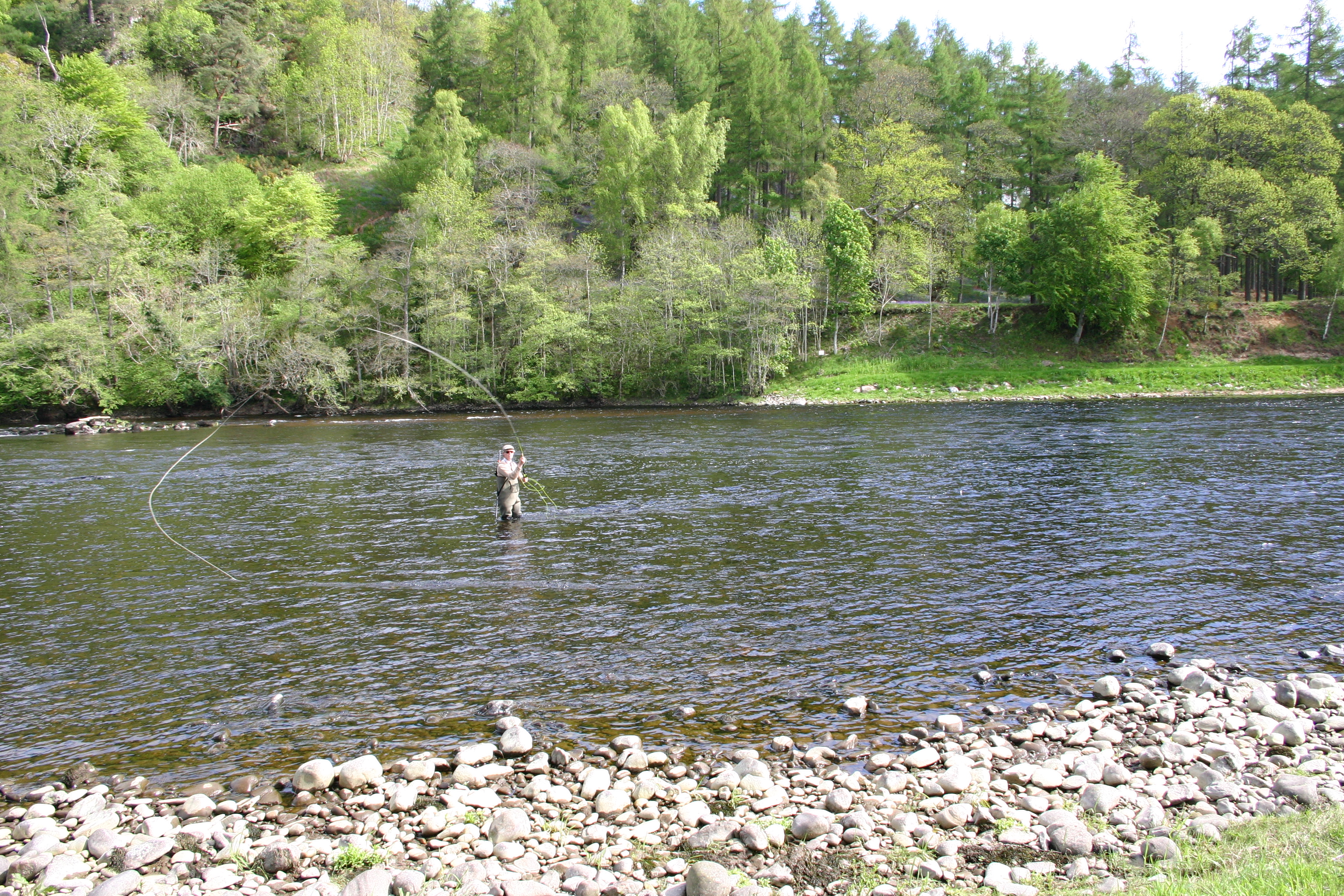 single spey loop